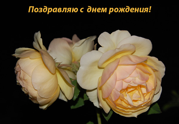 http://ns.sitecity.ru/fimages/a/a-runa/storage/album_0809202556_3791.jpg