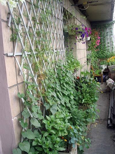 Какие цветочки можно посадить летом на балконе?.
