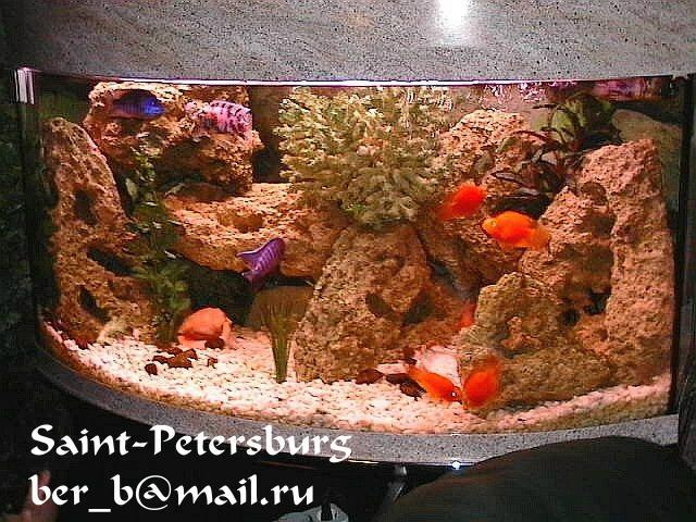 Фотоальбом :: aquahobbi-spb.sitecity.ru