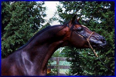 http://ns.sitecity.ru/users/b/beauty-horses/storage/lalbum_0505131704.p_0505131746_6945.jpg
