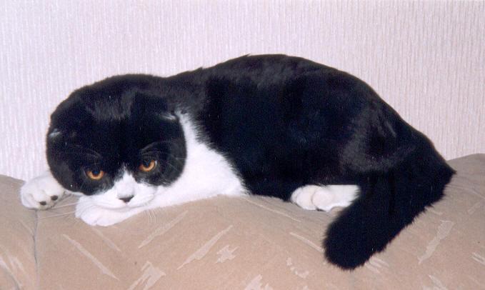 Домашние кошки. Каталог домашних пород кошек с фото и ...