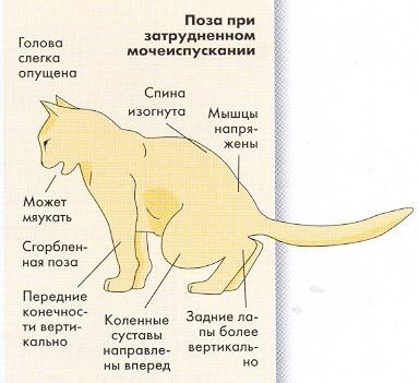 Как лечить цистит у котов в домашних условиях 126