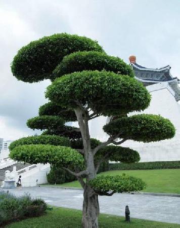 Стрижка кустарников и деревьев