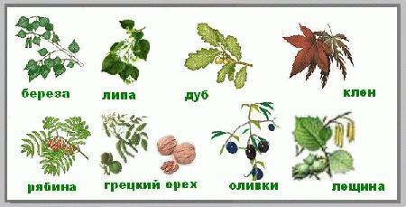 Деревья Покровители Тельца