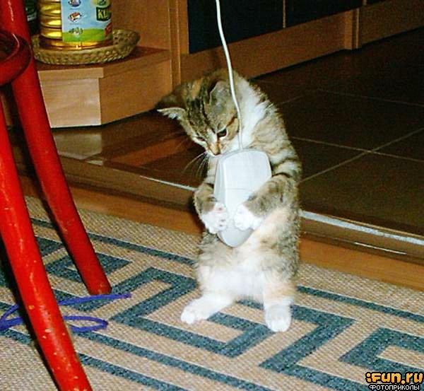 кошка без когтей ловит мышей