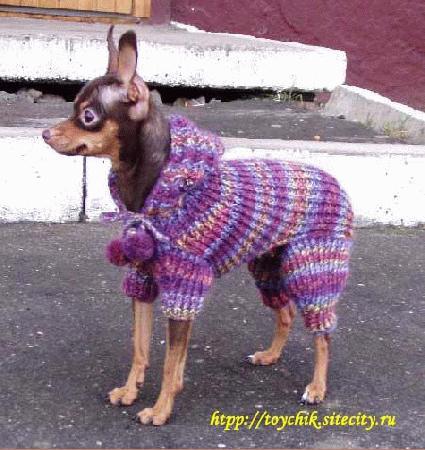 КОМБИНЕЗОН с капюшоном.  Вы убедились, что одежда для собаки своими...