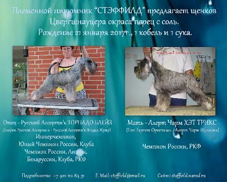 http://ns.sitecity.ru/users/z/zwerg-lyufem/storage/ltext_1806185501.p_0102132908.reklama.jpg