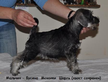 http://ns.sitecity.ru/users/z/zwerg-lyufem/storage/ltext_1806185501.p_0409055123.sharl.jpg