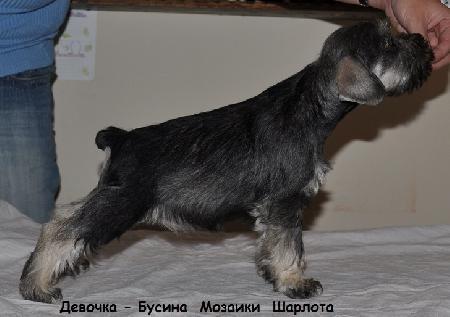 http://ns.sitecity.ru/users/z/zwerg-lyufem/storage/ltext_1806185501.p_0409055123.sharlota.jpg