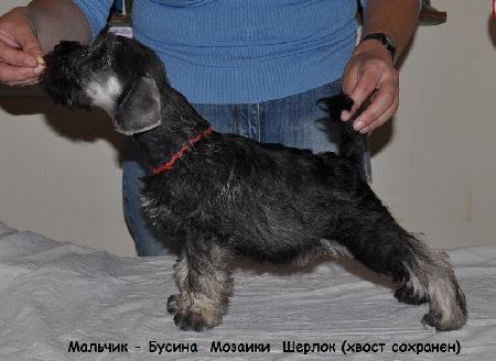 http://ns.sitecity.ru/users/z/zwerg-lyufem/storage/ltext_1806185501.p_0409055123.sherlok2.jpg