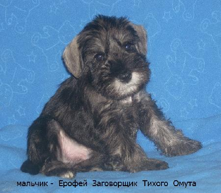 http://ns.sitecity.ru/users/z/zwerg-lyufem/storage/ltext_1806185501.p_1803045553.male2a.jpg