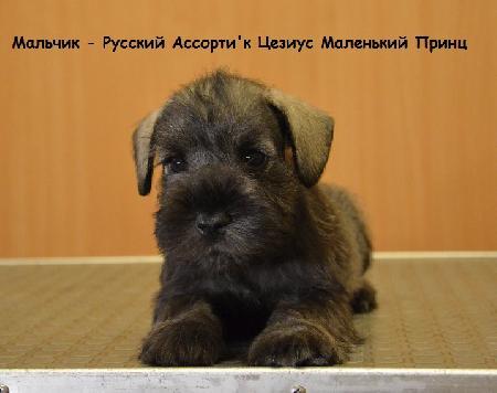 http://ns.sitecity.ru/users/z/zwerg-lyufem/storage/ltext_1806185501.p_2011080020.maleaa.jpg