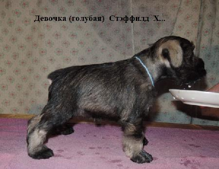 http://ns.sitecity.ru/users/z/zwerg-lyufem/storage/ltext_1806185501.p_2410092922.female1.jpg