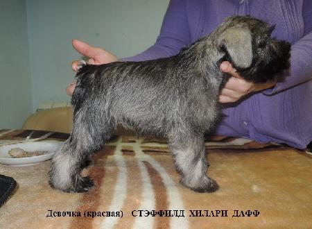 http://ns.sitecity.ru/users/z/zwerg-lyufem/storage/ltext_1806185501.p_2410092922.hilari.jpg