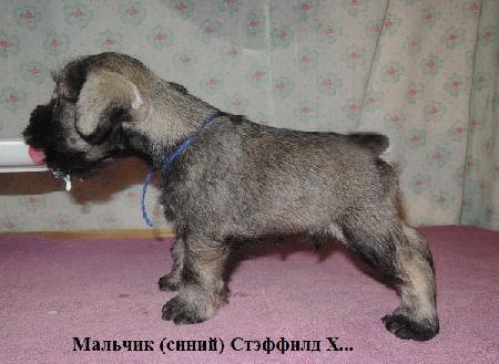 http://ns.sitecity.ru/users/z/zwerg-lyufem/storage/ltext_1806185501.p_2410092922.male1.jpg