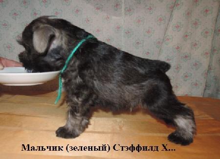 http://ns.sitecity.ru/users/z/zwerg-lyufem/storage/ltext_1806185501.p_2410092922.male2.jpg