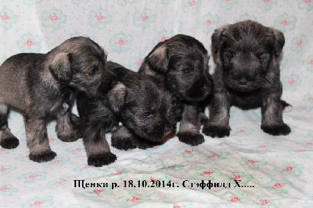 http://ns.sitecity.ru/users/z/zwerg-lyufem/storage/ltext_1806185501.p_2410092922.puppy.jpg
