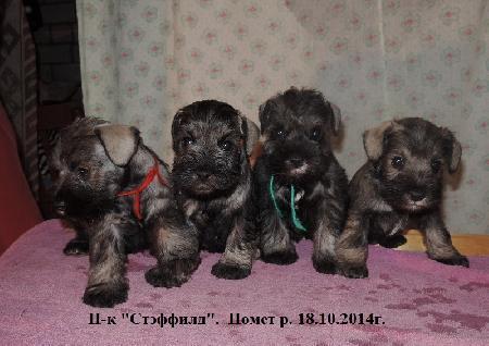 http://ns.sitecity.ru/users/z/zwerg-lyufem/storage/ltext_1806185501.p_2410092922.puppy3.jpg