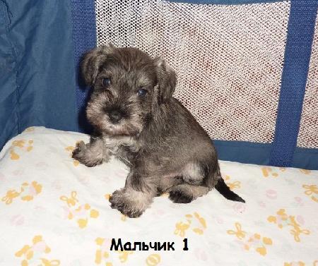http://ns.sitecity.ru/users/z/zwerg-lyufem/storage/ltext_1806185501.p_3108101648.male1.jpg