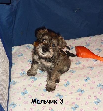 http://ns.sitecity.ru/users/z/zwerg-lyufem/storage/ltext_1806185501.p_3108101648.male3.jpg