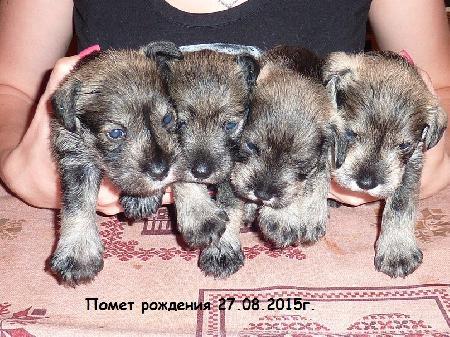 http://ns.sitecity.ru/users/z/zwerg-lyufem/storage/ltext_1806185501.p_3108101648.puppy.jpg