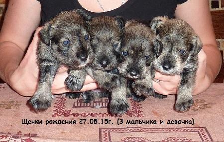 http://ns.sitecity.ru/users/z/zwerg-lyufem/storage/ltext_1806185501.p_3108101648.puppy1.jpg