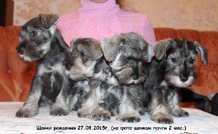 http://ns.sitecity.ru/users/z/zwerg-lyufem/storage/ltext_1806185501.p_3108101648.puppy2.jpg