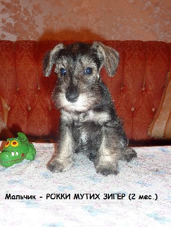 http://ns.sitecity.ru/users/z/zwerg-lyufem/storage/ltext_1806185501.p_3108101648.rokki1.jpg